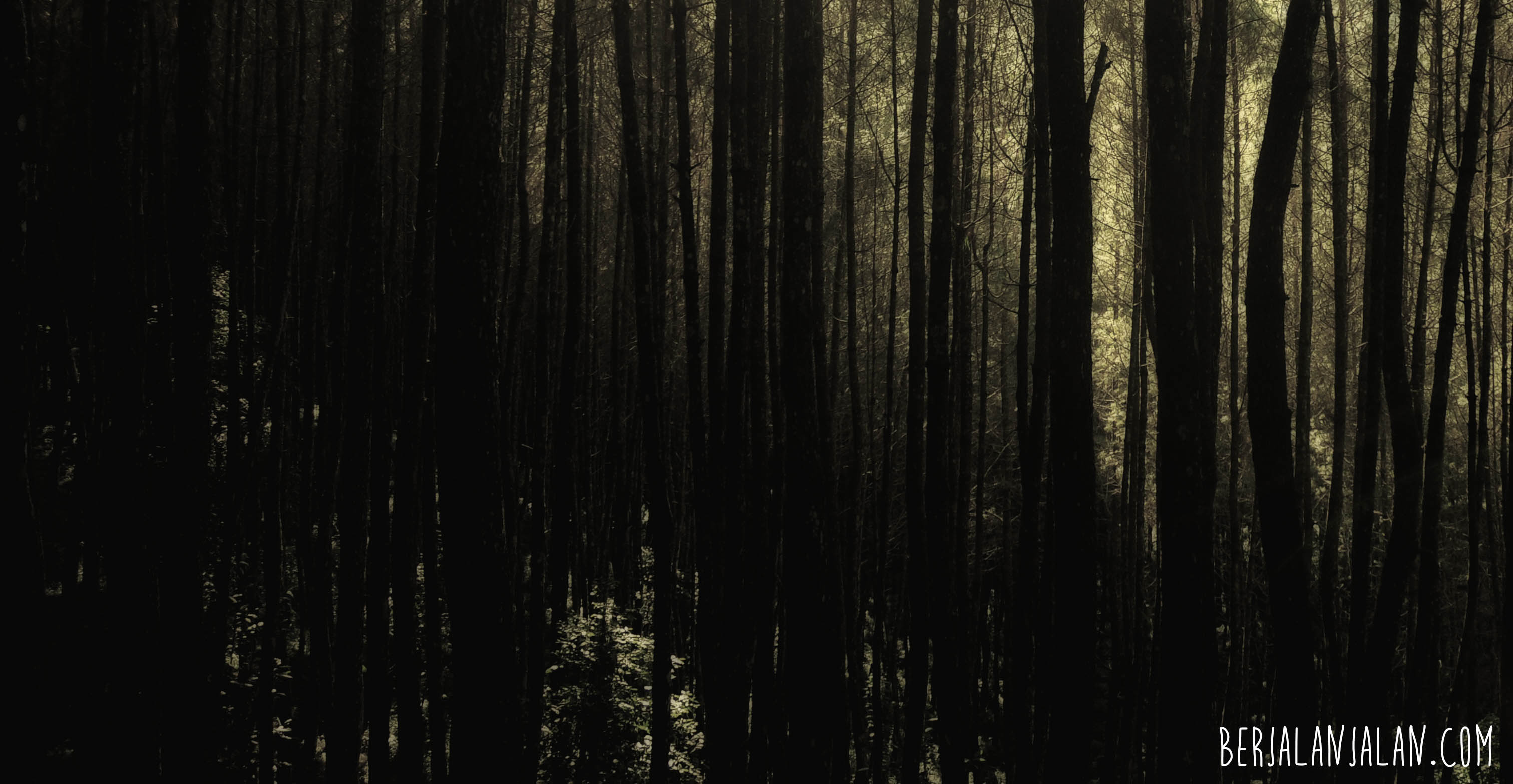 dark, hutan, pinus, pine forest bandung, west java, wonderfull indonesia, visit west java